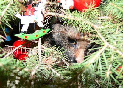 weihnachtskatze-blog92