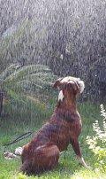 Hund im Regenwald