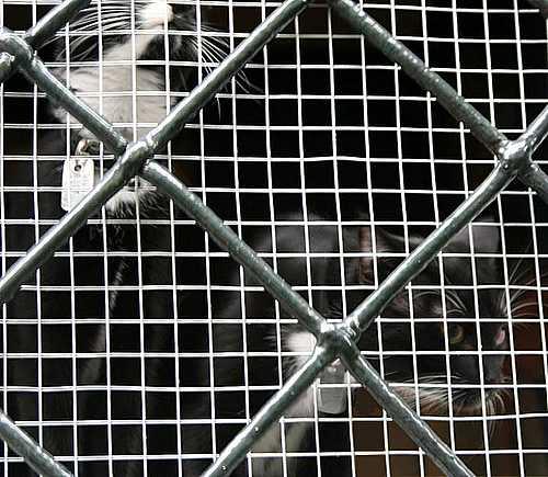 hinter Gittern