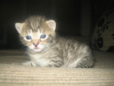 wir haben angst dass unser katzenbaby blind ist seite 2 katzen forum. Black Bedroom Furniture Sets. Home Design Ideas