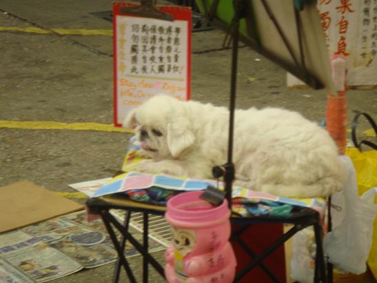 HundMongKok