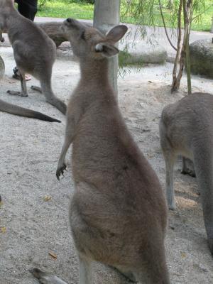 Australian-Outback1