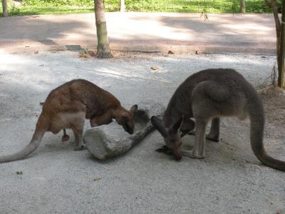 Australian-Outback2