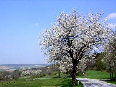spring in lower austria