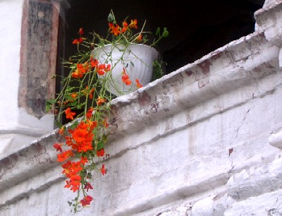 flowers in yaroslavl kremlin