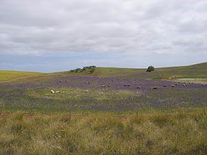 sheephills