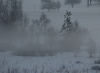 Bäme im Nebel