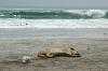 Beach Iquique