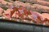 Blätterrinne