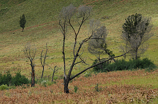 Burned trees in the Tengger caldera