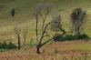 Burned trees in the Tengger caldera