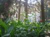Fin Garten