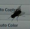Fliege vor Monitor