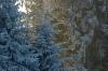 Glühende Bäume