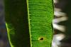 Kaktus-Details