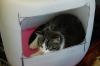 Katzeniglu mit Nachbarkatze