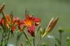 Künstlicher Regen in der Trockenzeit
