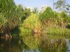 Lake in the Botanical Gardens