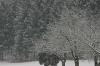 Leise rieselt der Schnee