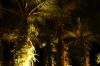 Night in the Botanical Garden
