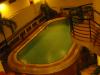 Alocassia Pool