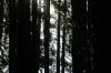 Schnacken im Wald