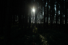Sonnenuntergang im Wald