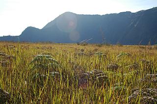 Grass sea