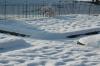 Garten im Schneekleid