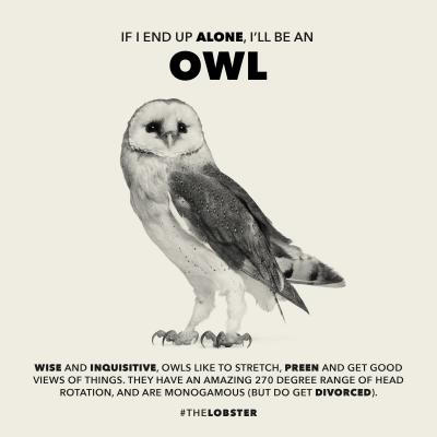 owl_poster
