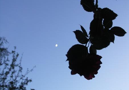 Abends-in-der-Rosenlaube