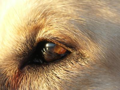 Arnos-Auge