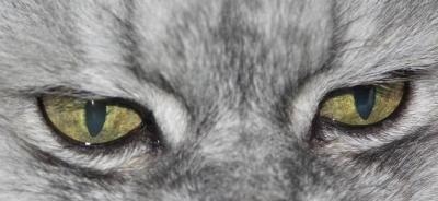 Cindy-Augen