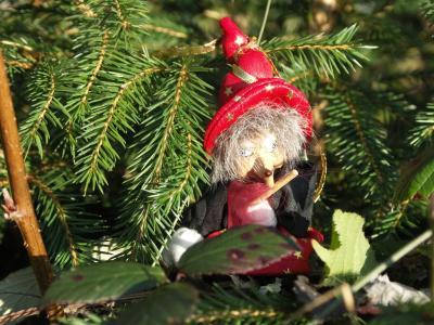 Hexe-im-winterlichen-Weihnachtsbaum-Wald