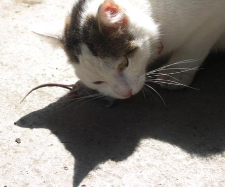Katz-und-Maus-