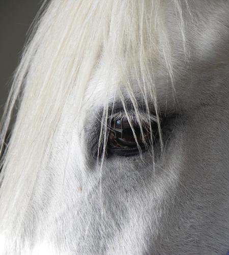 Pferde-Auge