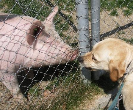 Schwein-und-Hund-Schweinehund