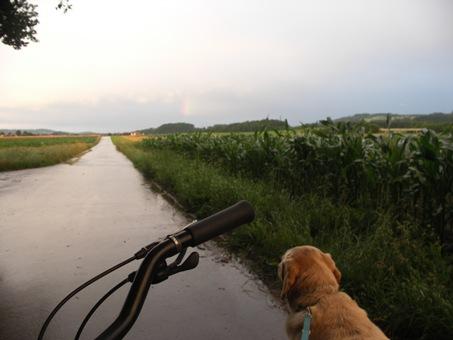 Velofahrt-mit-Hund