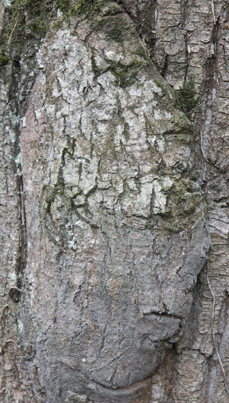 mein-Baum-