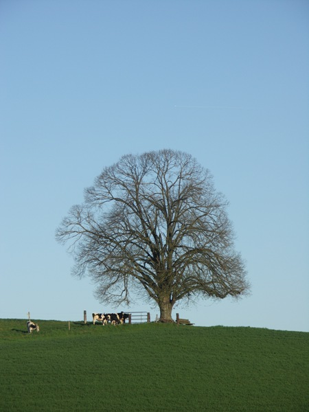 mein-Baum-im-April