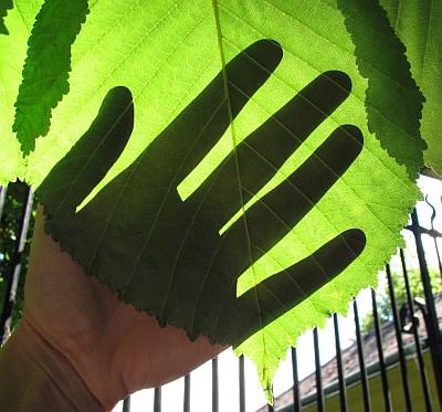 ein grünes händchen