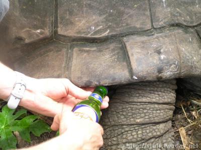 Bier öffnen mit Tapsi Turtle