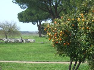 08mar_paestum_orangen
