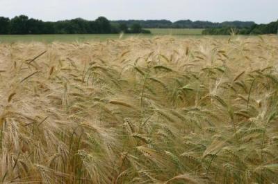 """""""das ist ein Weites Feld meien Liebe Effi"""""""