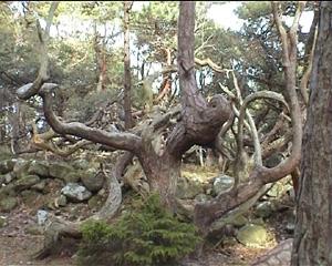 troll-skog