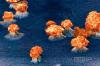 Exploding-Nano-Wires