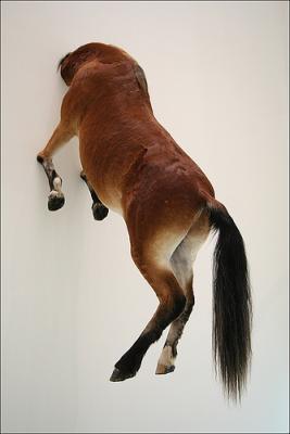Pferd-mit-Kopf-in-Wand