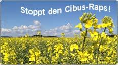 button_cibus_raps