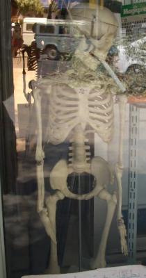 Skelett mit Fluppe