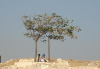 Zwei Menschen und zwei Bäume